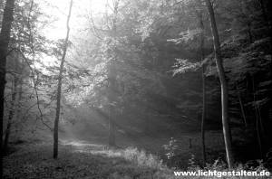 Forest near Göttingen, Germany